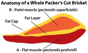 Diagram of a whole beef brisket