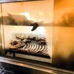 meat in the aquarium smoker