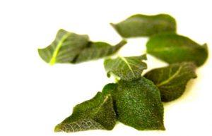 deep fried sage leaves